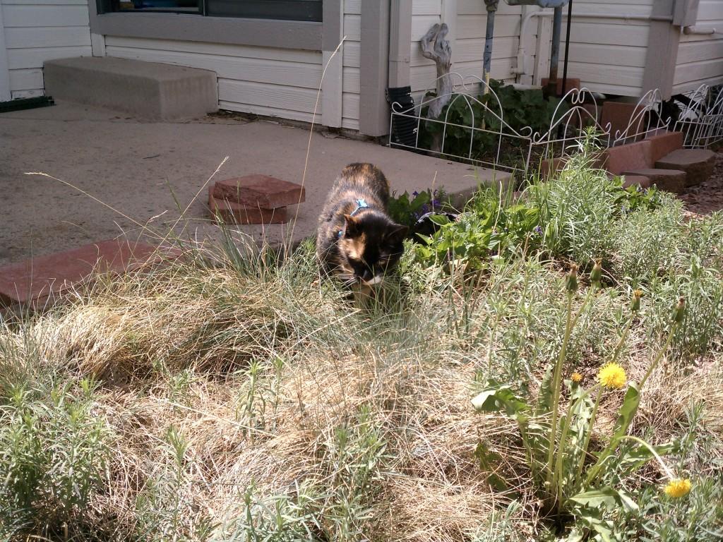 Talore finding her spot